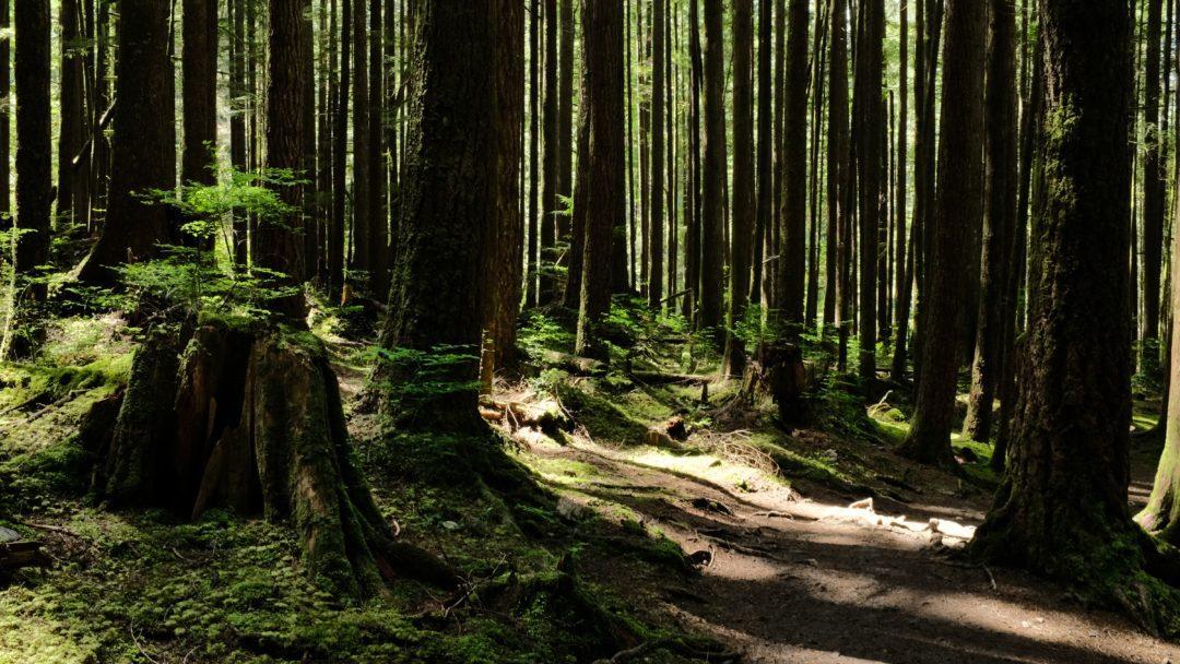 60011318c4 Fazer trilha é viver e muito mais do que isso, é aproveitar cada minuto o  contato com a natureza.